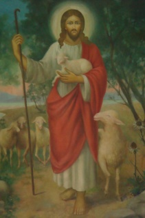 B Shepherd2